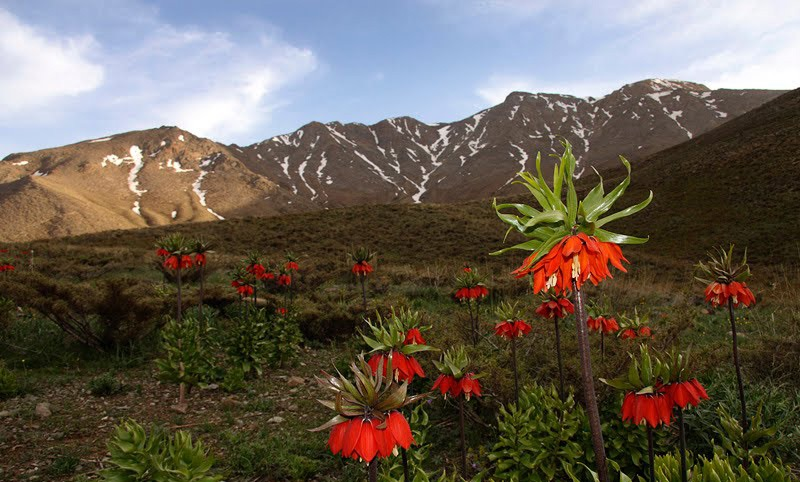 ناحیه حفاظت شده ی گلستان کوه | خوانسار