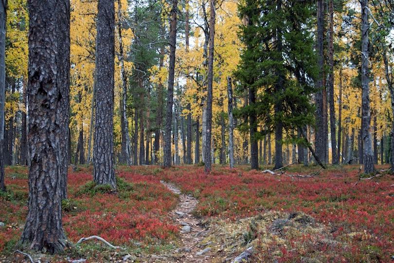پارک ملی اورهو ککنون | فنلاند