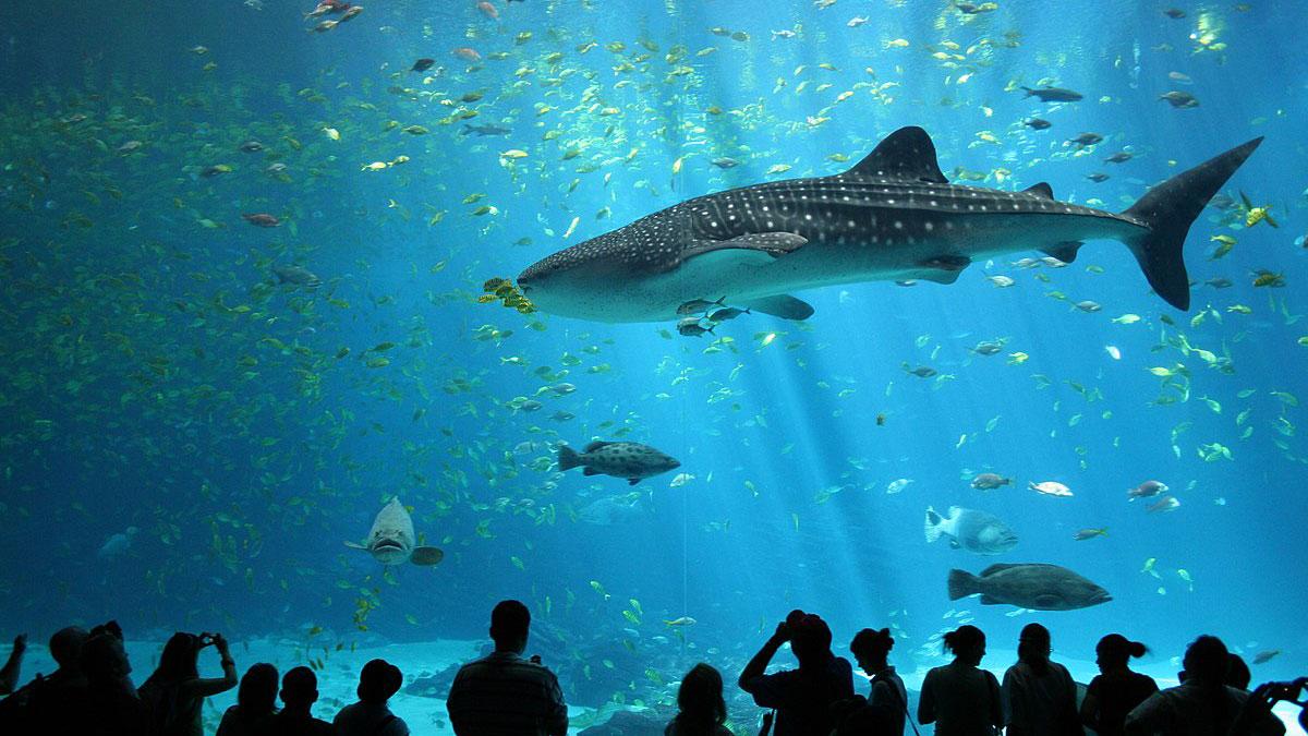 آکواریوم آب شور پارک دلفین کیش