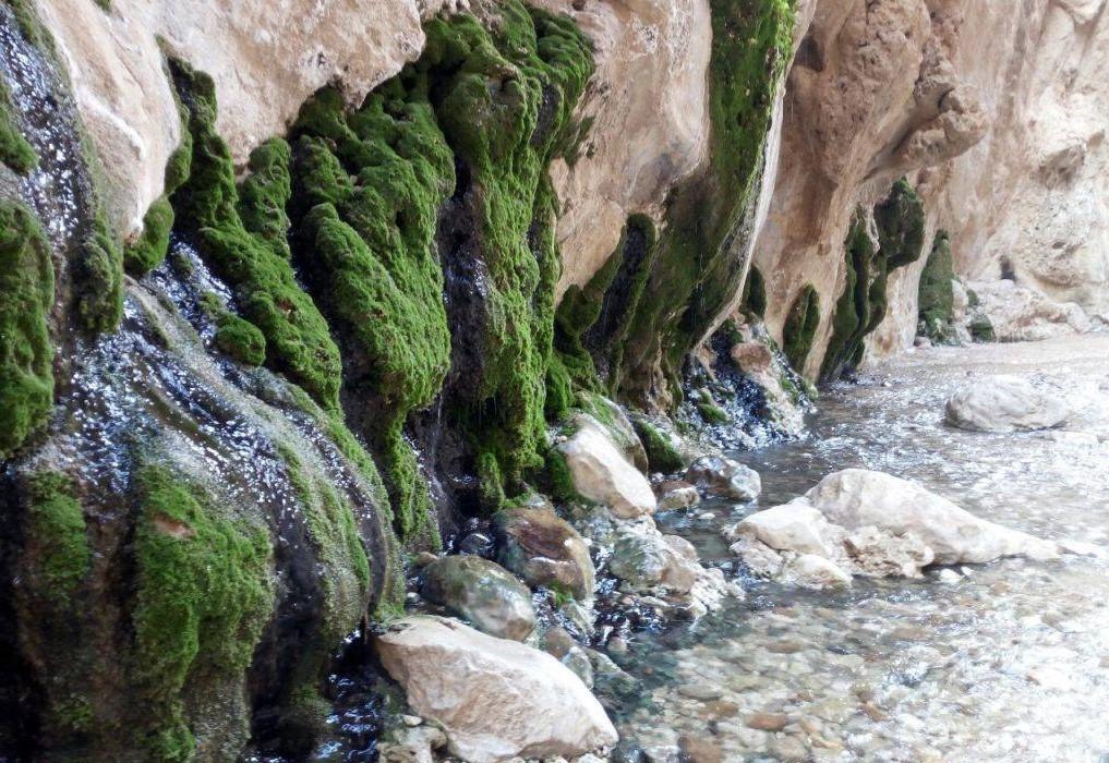 چشمه مرتضی علی طبس