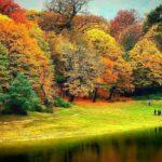 پارک جنگلی ناهار خوران