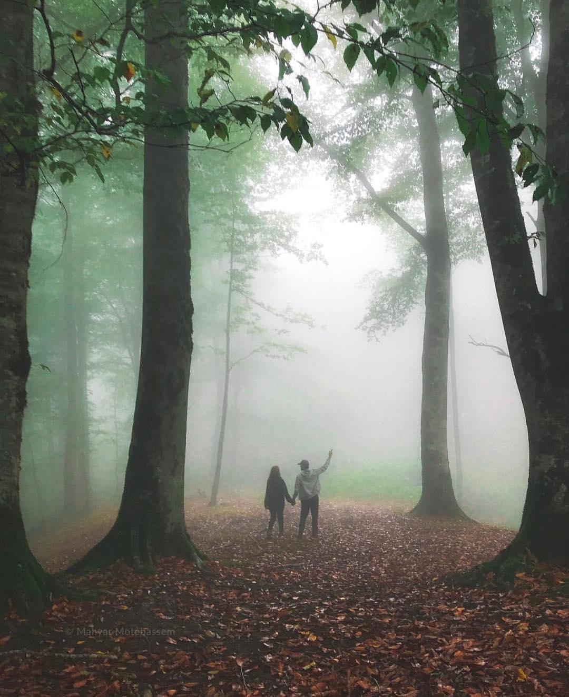 جنگل مه آلود پاسند ،گردشگری شمال ایران