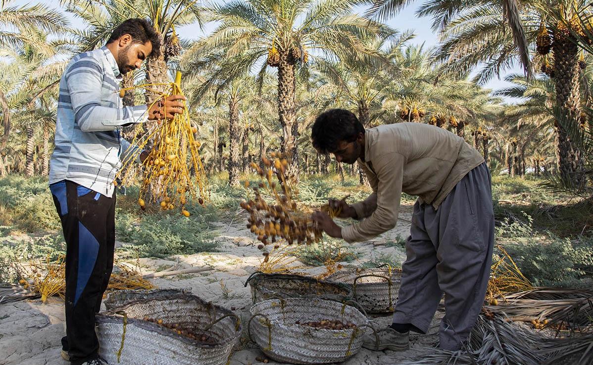 شهر آبپخش دشتستان، گردشگری بوشهر