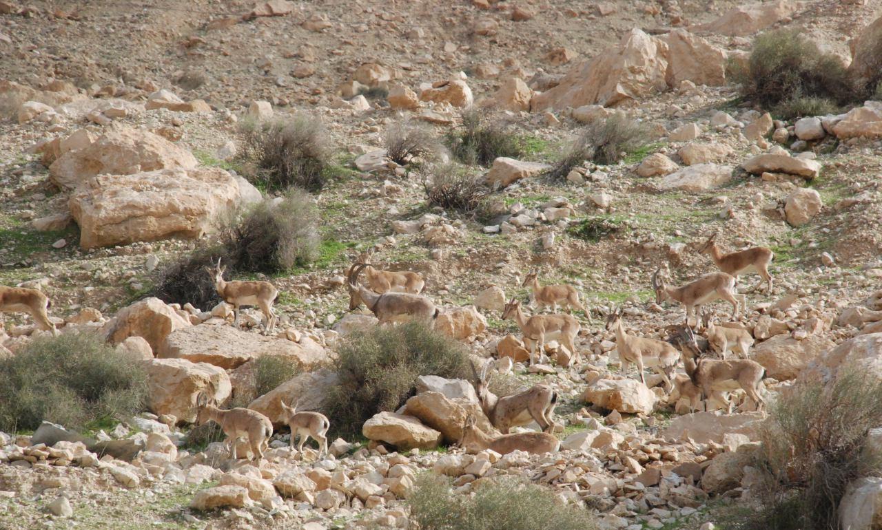 منطقه حفاظت شده چهل پا، گردشگری اندیمشک