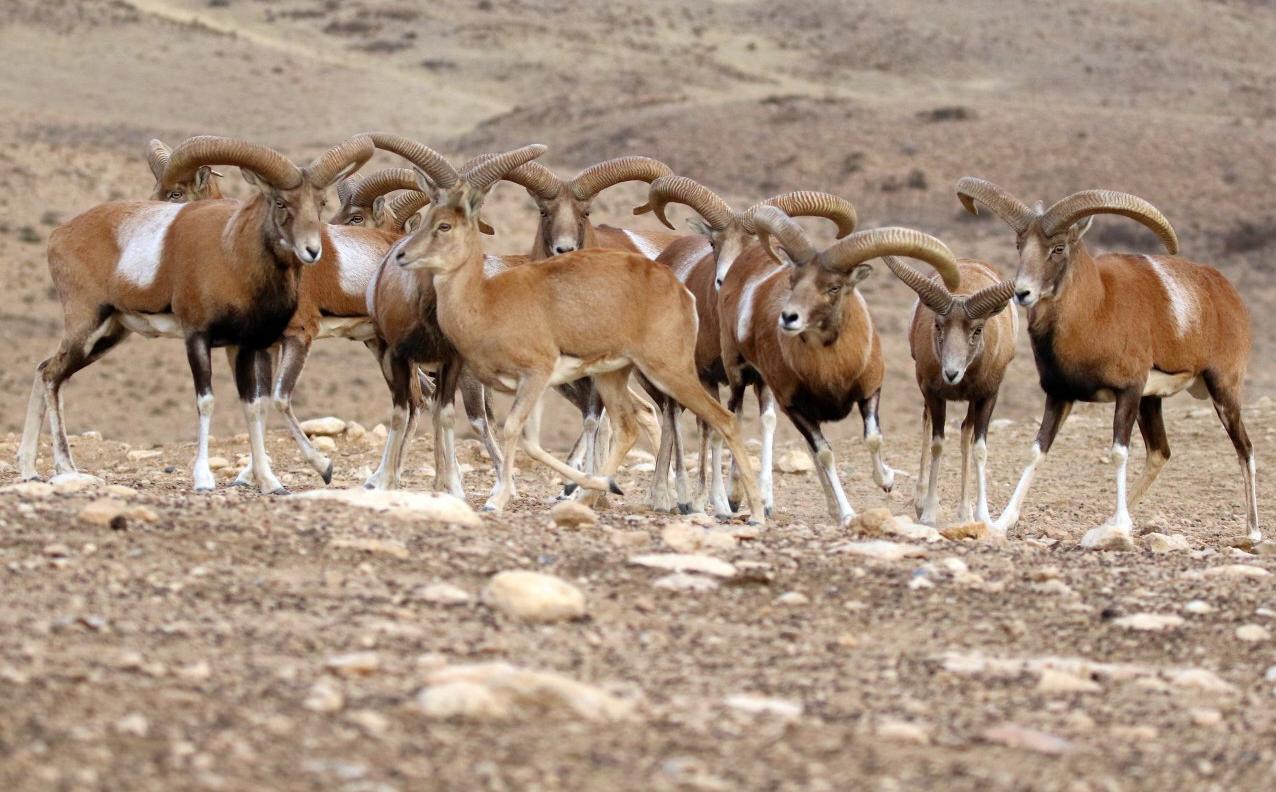 جاذبه گردشگری پارک ملی بختگان شیراز 2