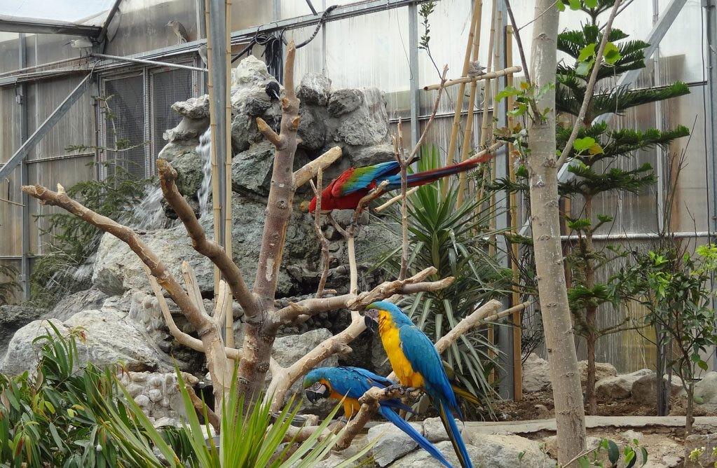 باغ پرندگان ، پارک جنگلی شیان