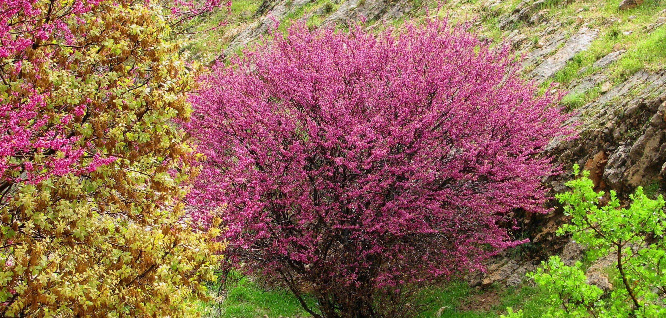 جاذبه گردشگری تنگه ارغوان استان ایلام