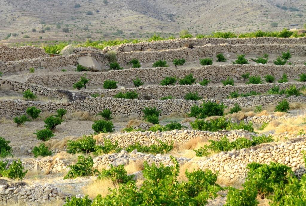 روستاي دوان کازرون
