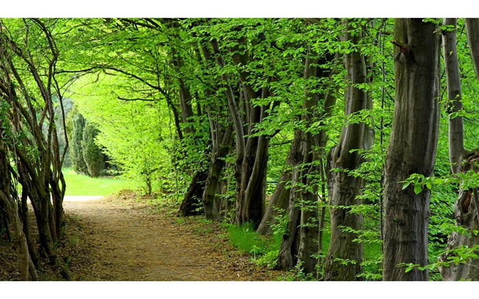 جنگل سی سنگان