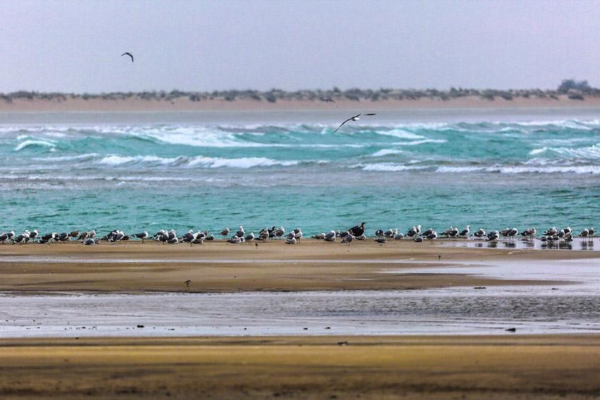 خلیج گواتر | بندر گواتر