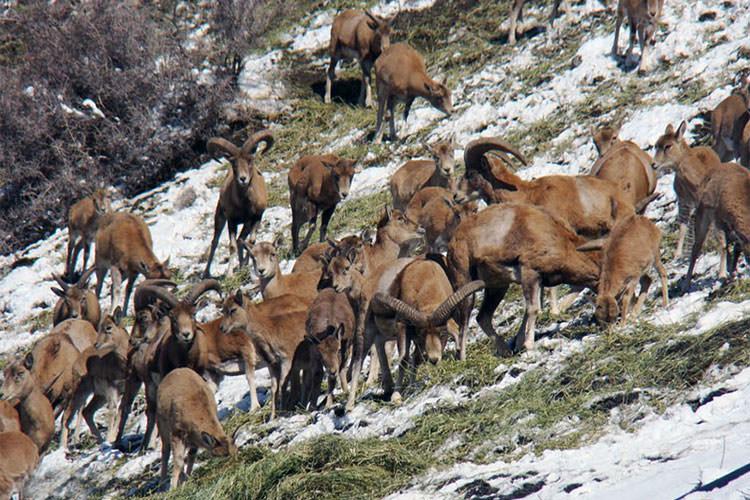 پارک ملی لار | گونه جانوری