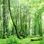 پارک جنگلی نور