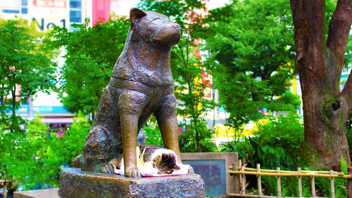مجسمه هاچیکو (Hachiko Statue)