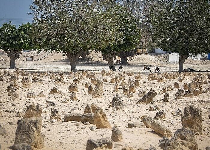 قبرستان پرتغالی ها-جزیره هندورابی