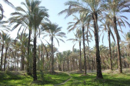 آشنایی با دیدنی های آب پخش بوشهر