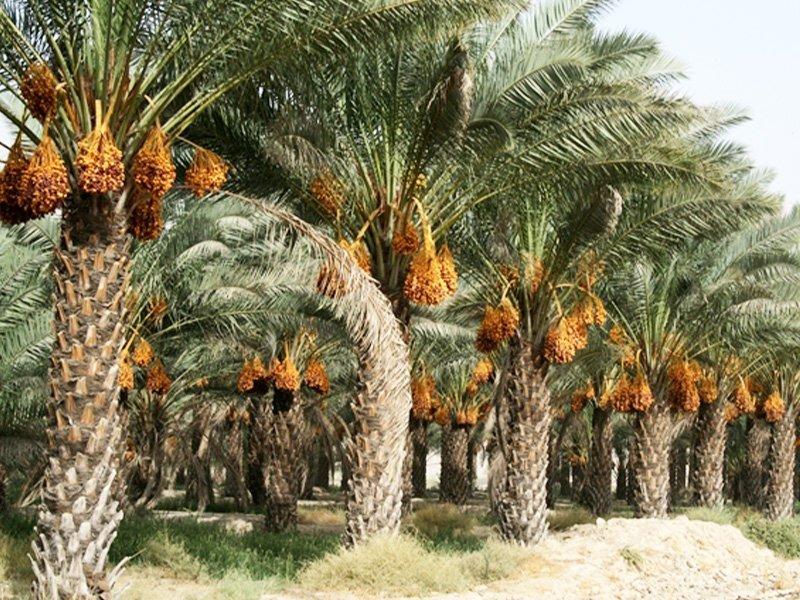 آب پخش بوشهر