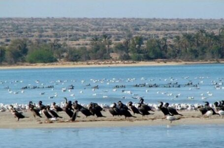تالاب حله ، بندر گناوه | استان بوشهر