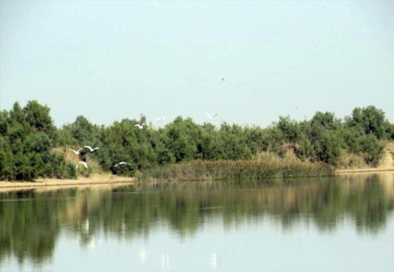 تالاب حله بوشهر