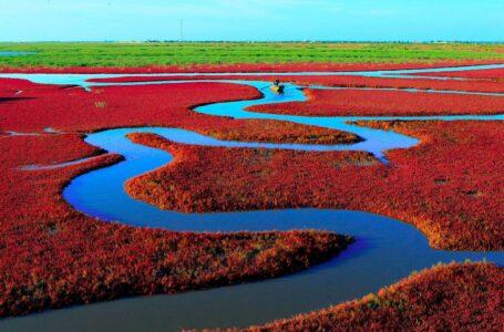 ساحل قرمز پانجین،چین