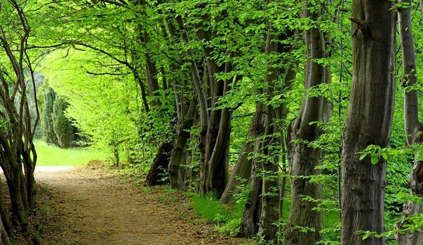 جنگل سه هزار تنکابن